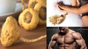 La maca bio pour les hommes pour des raisons de virilité et de fertilité, mais aussi comme anti cancer de la prostate